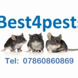 best 4 pests