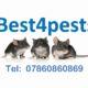 best 4 pests